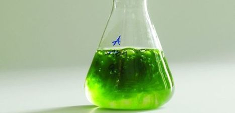 Energy Department Awards UA-Led Team $8M to Research Algae Biofuel | UANews | CALS in the News | Scoop.it