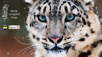 G4 website: Snow Leopard Day | G4 | Scoop.it