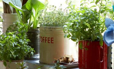 16 DIY Container Garden Ideas | Care2 Healthy Living | garden | Scoop.it