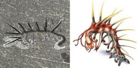 Le plus vieil ancêtre des animaux à corps mou: Hallucigenia | Ecologie Animale | Scoop.it