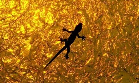 Un « gant-gecko » permet à une personne d'escalader un mur de ... - Science et Vie | Biomimétisme & Biomimicry | Scoop.it