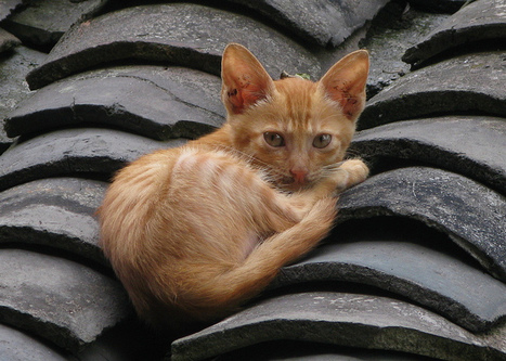 Cat on a Hot Tile Roof, Chengyang | Travelling Light | Scoop.it