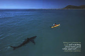 Internet Search Challenge: A Shark, a Kayak and a Tree Octopus   Information Technology Learn IT - Teach IT   Scoop.it