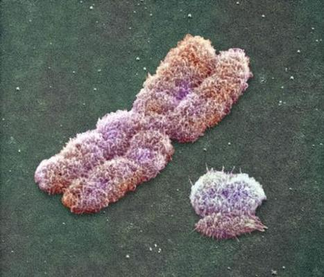 Human Y chromosome much older than previously thought | Amazing Science | Scoop.it
