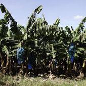 Apiculteurs consternés : Les épandages aériens de pesticides vont se poursuivre | EntomoNews | Scoop.it