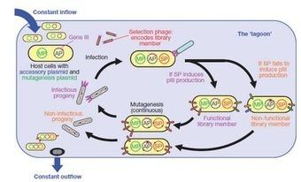Microbiología UMH: PACE (evolución continua y dirigida de biomoléculas) | Microbiología Industrial | Scoop.it