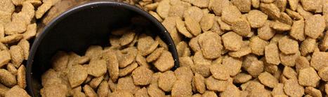 Miles de perros envenenados en EEUU por alimentos importados de China | Ciencias Agroalimentarias - Maquinaria y Equipos | Scoop.it