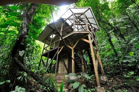 Sustainable Treehouse Community in the Costa Rican Jungle | Behavioral Tech | Scoop.it