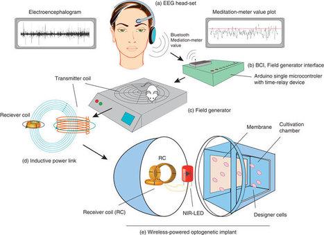 Mind Control of Gene Expression | mikrobiologija | Scoop.it