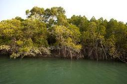 Sundarbans: Bangladesh begins oil clean-up with sponges and sacks - The Times of India | SOUTH ASIAN WEEKLYLINKS | Scoop.it