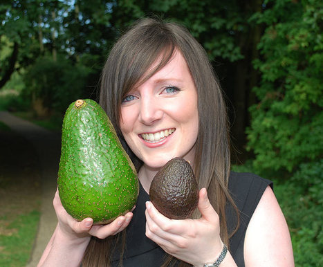Avozilla: the world's largest avocado | Agriculture,Urban Farming,Food security,Agriprenuership, Youth, Ag Journalism and  Online Ag media | Scoop.it