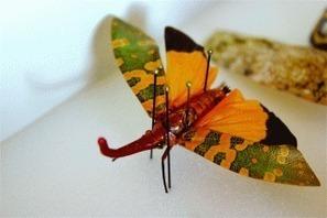 The Metamorphosis of the Bug Man | Tucson Weekly | CALS in the News | Scoop.it