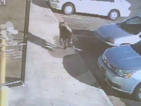 Dog takes bullet for family, saves child after road rage attack | Littlebytesnews Current Events | Scoop.it