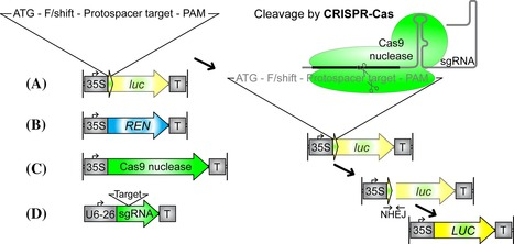 Comparative assessments of CRISPR-Cas nucleases' cleavage efficiency in planta - Online First - Springer   Awesome Science That  I Like   Scoop.it