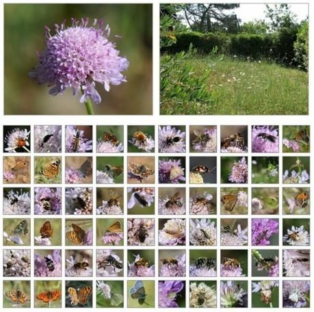 Bon plan pour tous les pollinisateurs ! | Environnement et développement durable, mode de vie soutenable | Scoop.it