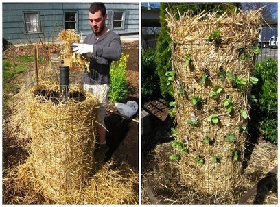 Another good idea for school gardens... - Oklahoma Ag in the Classroom | Facebook | Wellington Aquaponics | Scoop.it