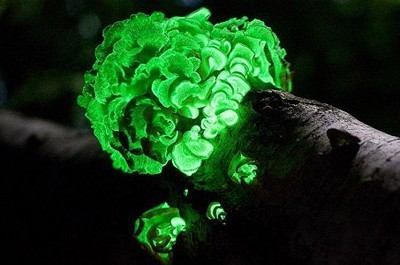 "Glowing ""Ghost"" Mushrooms Reappear in Brazil After 170 Years 