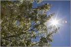 Exposition solaire et cabines UV - Exposition aux rayonnements UV - Environnement et cancers - Prévention - Institut National Du Cancer | svt soleil et cancer de la peau 2014 | Scoop.it