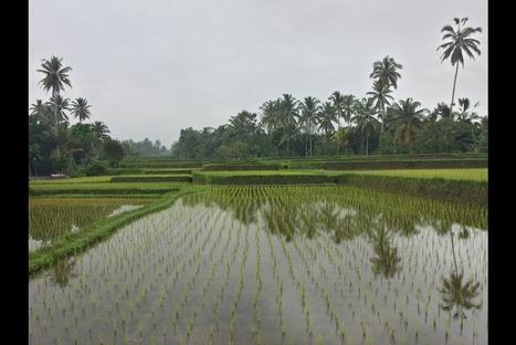 1001 couleurs d'Indonésie | Bali, Java,  (Indonésie),  Malaisie | Scoop.it