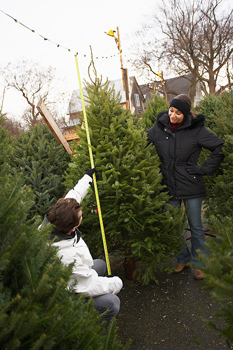 Christmas Tree  Selection and Care   Christmas Trees and More   Scoop.it