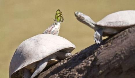 ALLPE Medio Ambiente Blog Medioambiente.org : Mariposas que ... | Las Perspectivas Latinas | Scoop.it