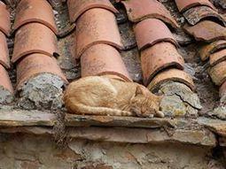 Los parásitos de los excrementos de gatos, un posible problema de salud pública | publicaciones veterinarias | Scoop.it