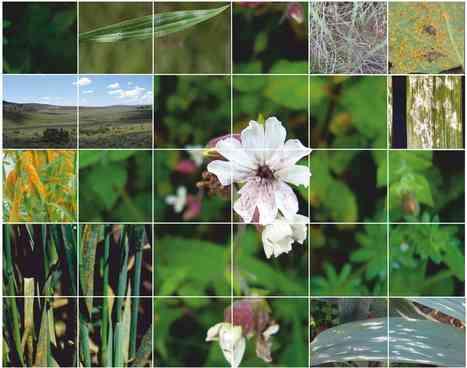 Wild Plant Pathosystems, 29-31 August 2016, Helsinki | Host-Pathogen Interactions | Scoop.it