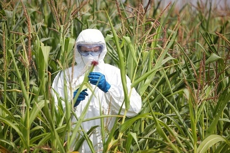 Glyphosate Herbicide Causes Antibiotic Resistant Bacteria, Kidney Disease, and Infertility   Electronics and Gizmos   Scoop.it