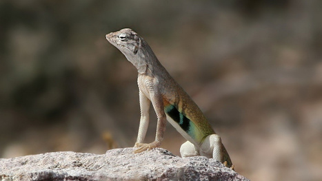 This New Polymer Regenerates Large Parts of Itself, Like Lizards Do | Strange days indeed... | Scoop.it