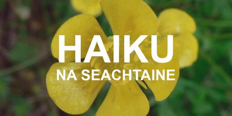 Haiku na seachtaine… | The Irish Literary Times | Scoop.it