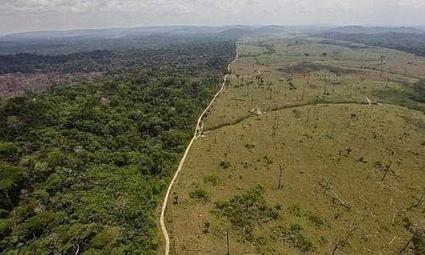 La deforestación estará concentrada para el 2030 | Agua | Scoop.it