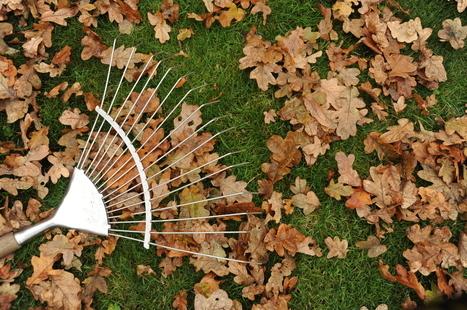 September Gardening: End of Summer Must Do's - DickiesStore.co.uk | Outdoors | Scoop.it