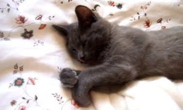 Kitten Wants To Sleep In | Care2 Healthy Living | The Best Care Products For Your Pet Cats And Kittens | Scoop.it