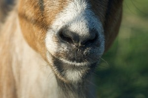 If Craigslist benefited charity, you would have the Social Good site KarmaGoat | Radical Compassion | Scoop.it