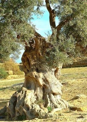 Arbre, mon ami: une poésie de Minou Drouet | Storytelling aziendale | Gli alberi nei giardini | Scoop.it