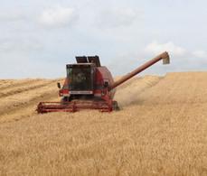Barley harvest starts on hottest weekend - Farmers Weekly | UK #harvest13 | Scoop.it