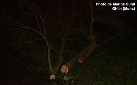 Tempête: des vents jusqu'à 115km/h, quatre blessés | Belgitude | Scoop.it