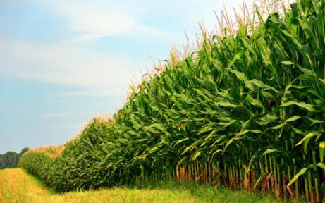 Grupos ligados ao campo são destaque na bolsa | Revista Ecoenergia | Geoflorestas | Scoop.it