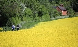 Scotland to issue formal ban on genetically modified crops | My Scotland | Scoop.it