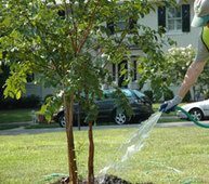 Tree Removal in Florida for Beautifying Them | SOUTHERN ARBOR SERVICES INC. | Scoop.it