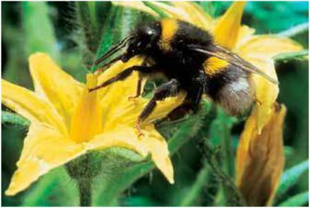 Finistère. À Guipavas, Saveol mise sur les insectes amis des plantes | Luttes biologiques | Scoop.it