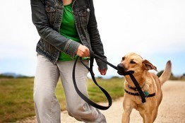 Paging Dr. Dog to Diagnose Disease   Gentle Dog Training and Care   Scoop.it