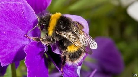 BBSRC funded: Protect more bee species to safeguard crops, say scientists | BIOSCIENCE NEWS | Scoop.it