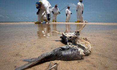 Deepwater Horizon: BP cry foul as 10000 claims flood in each month - The Guardian   BP Economic Recovery   Scoop.it