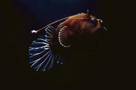 Final frontiers: the deep sea | In Deep Water | Scoop.it
