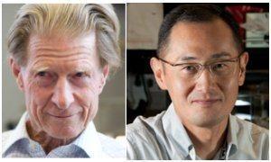 Premio Nobel de Medicina 2012: cómo retrasar el relojcelular | Sociedad en desarrollo | Scoop.it