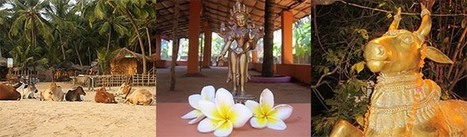 Yoga Teacher Training in Goa | Soul & Yoga International Yoga & Retreat Center | Scoop.it