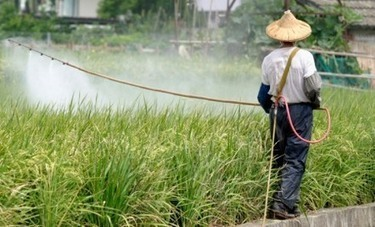 8 Million Acres of China's Farmland Too Polluted To Grow Food | Daily News About Organic Products | Scoop.it