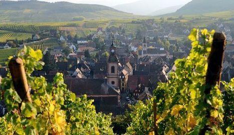 Le vignoble alsacien vers un nouvel âge d'or? | Le vin quotidien | Scoop.it