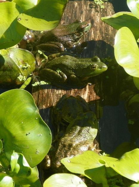 LIZA AND JOHN'S GARDEN LIZA AND JOHN'S GARDEN - | Grown Green Gardens | Scoop.it